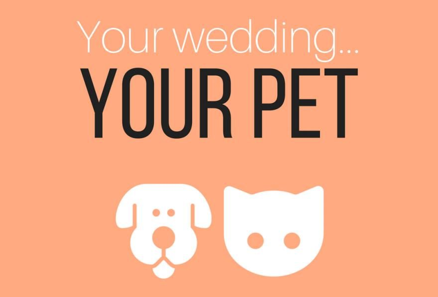 Your wedding… your pet